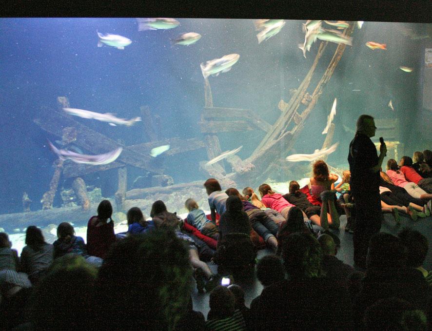 aquarium2963.jpeg
